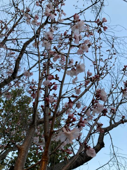 春の花_a0098418_08564074.jpg