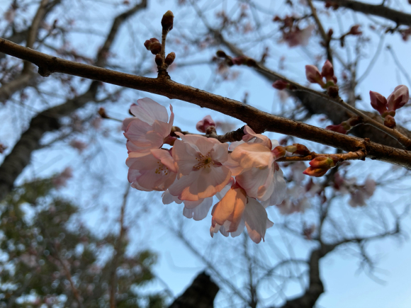 春の花_a0098418_08564466.jpg