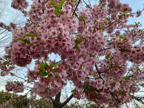 春の花_a0098418_08565195.jpg