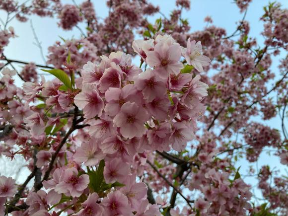 春の花_a0098418_08573878.jpg