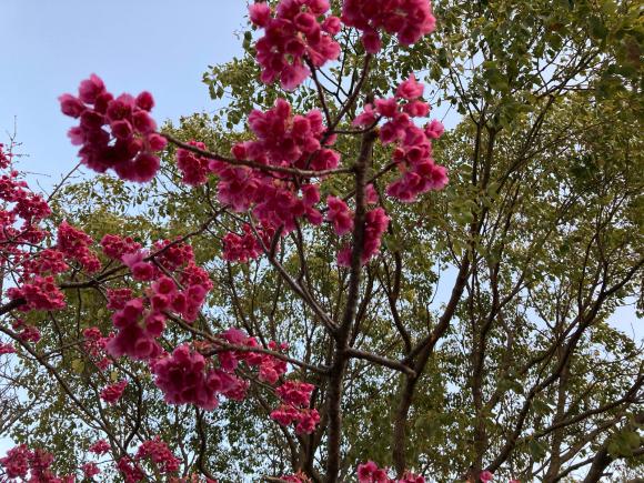 春の花_a0098418_08574694.jpg