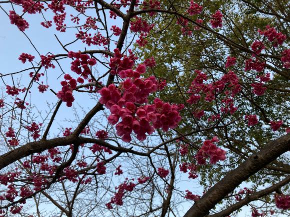 春の花_a0098418_08575380.jpg