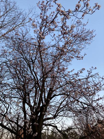 春の花_a0098418_08580142.jpg