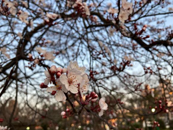 春の花_a0098418_08580678.jpg