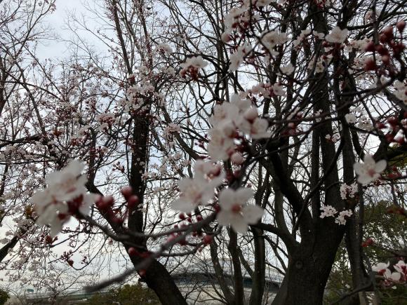 春の花_a0098418_09000761.jpg