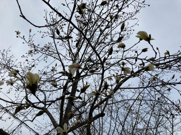 春の花_a0098418_09001557.jpg