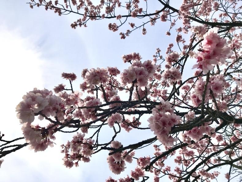 春の心身の整え方_d0085018_20021045.jpeg