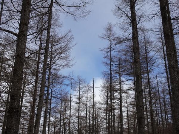 雪山ハイク入門の入笠山へ。_a0138134_01055859.jpeg