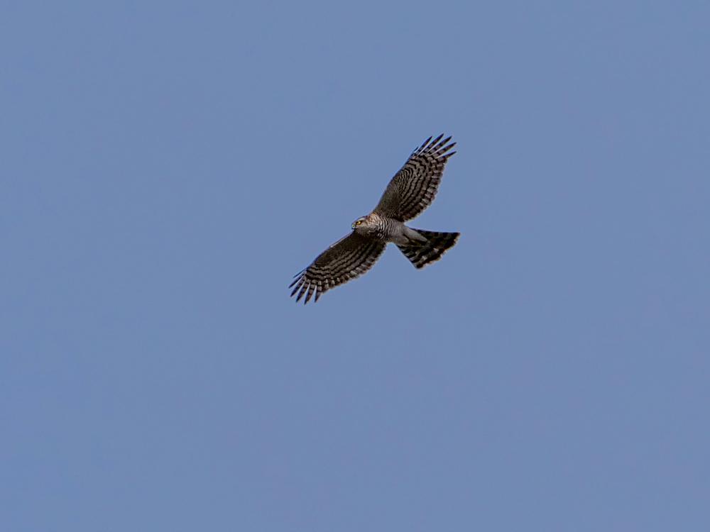 鳥色々_f0199866_19282604.jpg