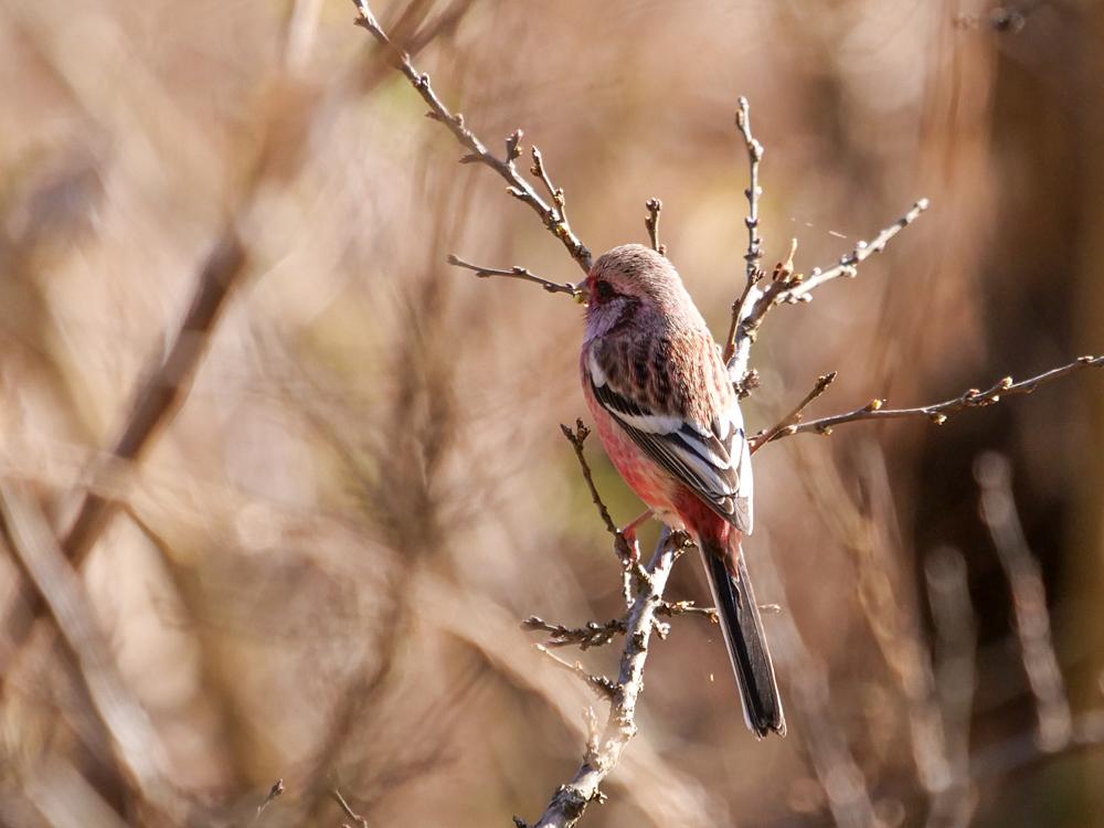 鳥色々_f0199866_19332692.jpg