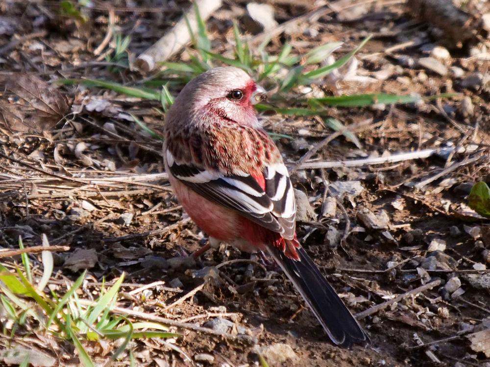 鳥色々_f0199866_19333798.jpg