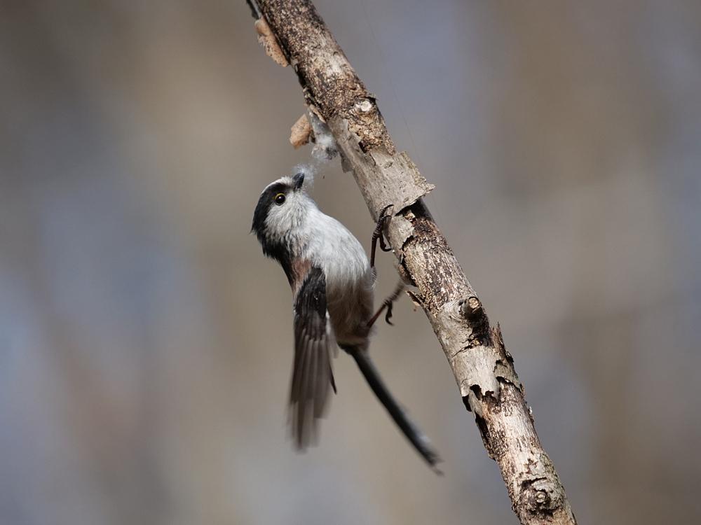 鳥色々_f0199866_19372123.jpg