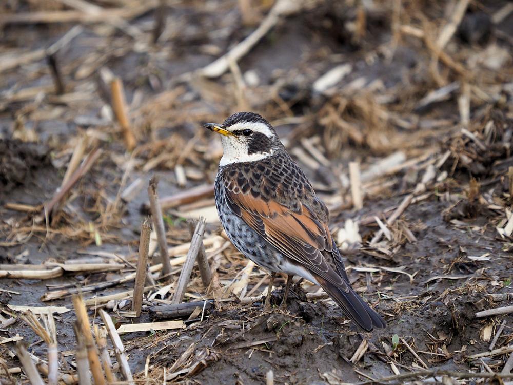 鳥色々_f0199866_19382249.jpg