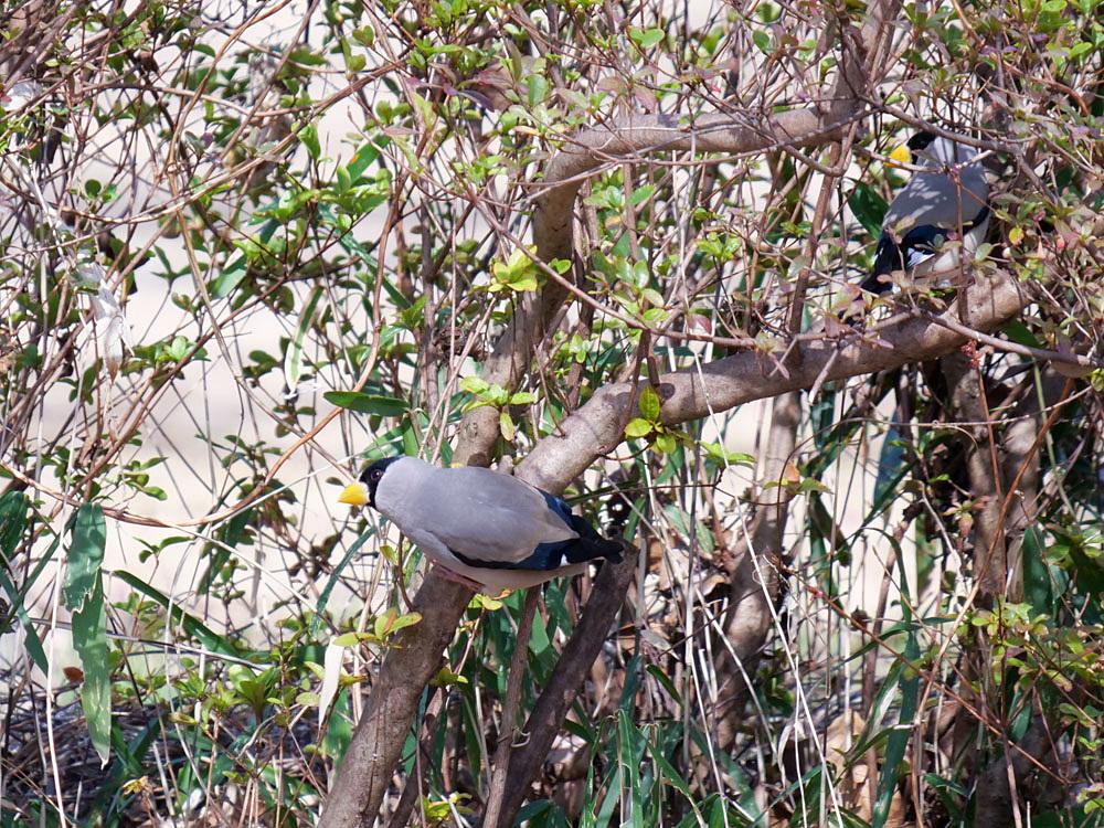 鳥色々_f0199866_19410371.jpg