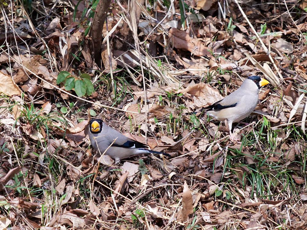 鳥色々_f0199866_19411096.jpg