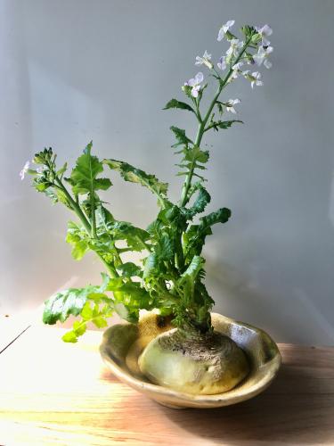 花が咲く_e0103327_12521393.jpg