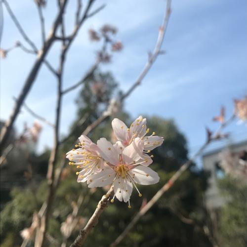花が咲く_e0103327_12521497.jpg