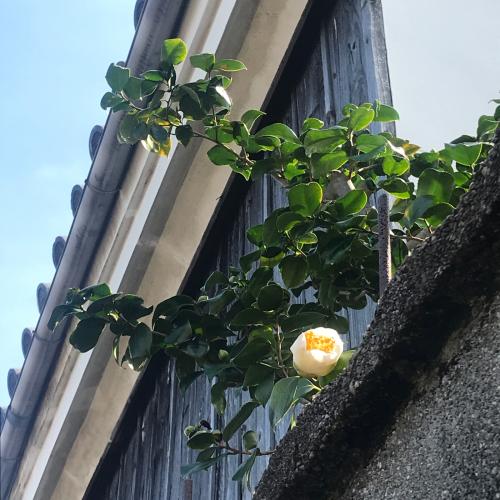 花が咲く_e0103327_12521780.jpg