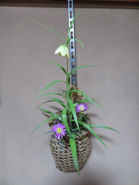 春緩む花々 バイモユリ_f0329849_13273143.jpg