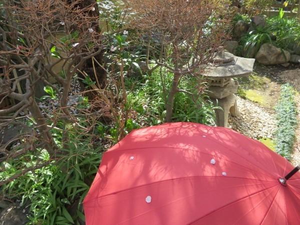傘に散る梅花_f0329849_17504749.jpg