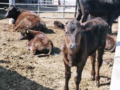 大人気!熊本県産A5ランク黒毛和牛100%のハンバーグステーキ!毎月1回の限定販売!3月は24日発送! _a0254656_18332462.jpg