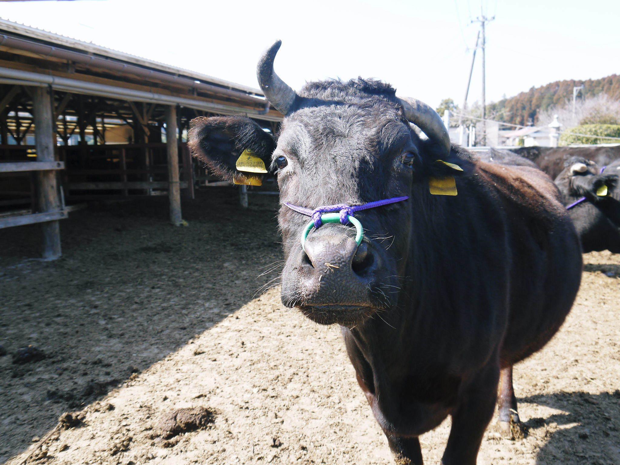 大人気!熊本県産A5ランク黒毛和牛100%のハンバーグステーキ!毎月1回の限定販売!3月は24日発送! _a0254656_18345353.jpg