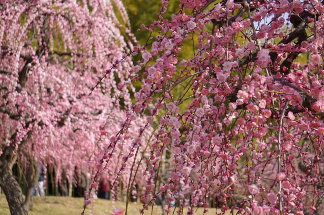 梅に鶯 ~春到来~_a0113003_09230507.jpg