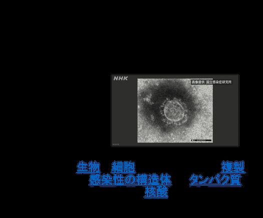 2020年11月2日 『乾癬の仕組み -コロナと免疫-』_c0219616_10315404.png