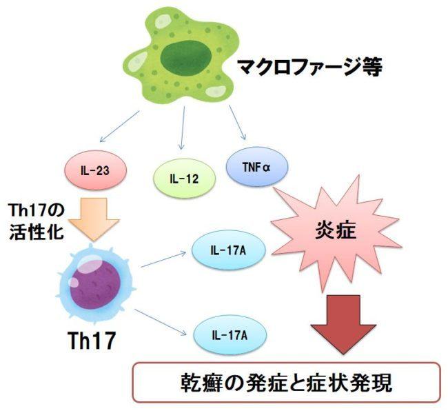 2020年11月2日 『乾癬の仕組み -コロナと免疫-』_c0219616_10541541.jpg
