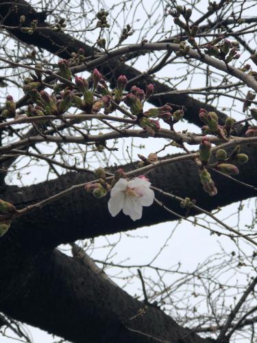 春が来た_a0279858_12180218.jpg