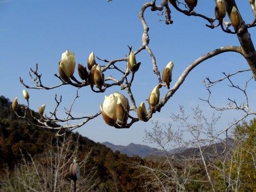 路傍の花、樹々の鳥(402) ~ 北摂の春 ~_b0102572_10133829.jpg