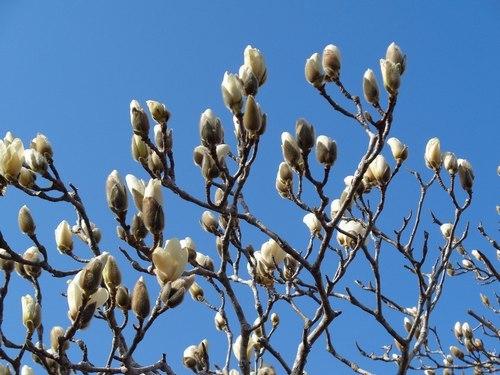 路傍の花、樹々の鳥(402) ~ 北摂の春 ~_b0102572_10135480.jpg
