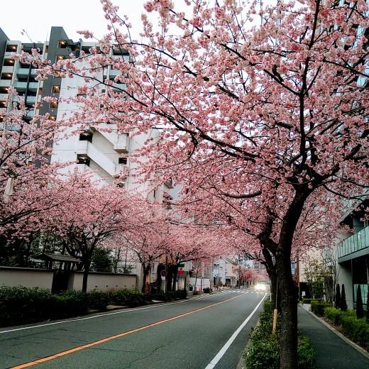 春が来る_b0117476_09325813.jpg