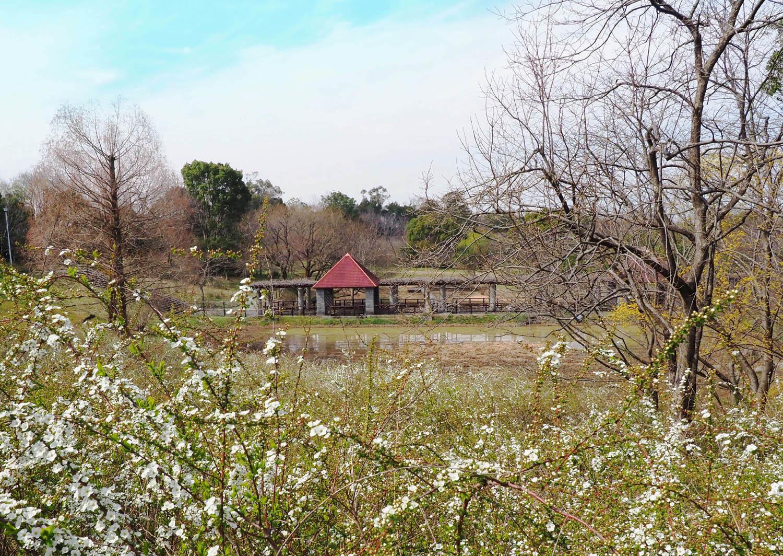 蜻蛉公園_e0254493_10285761.jpg