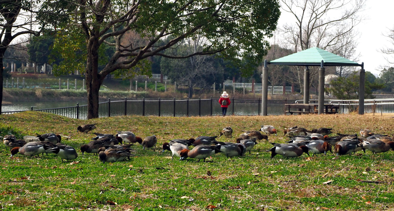 蜻蛉公園_e0254493_10290576.jpg