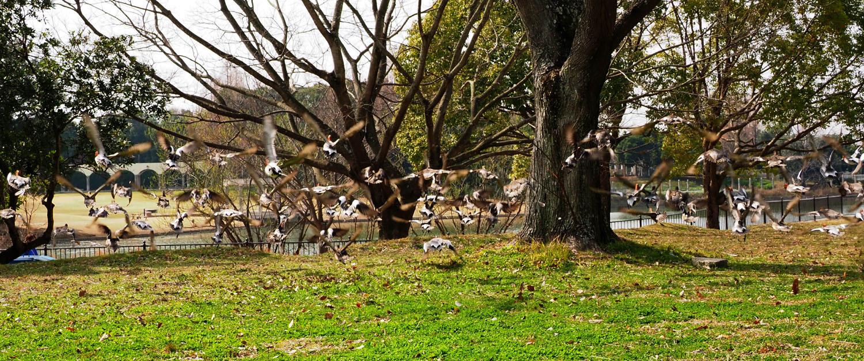蜻蛉公園_e0254493_10290931.jpg