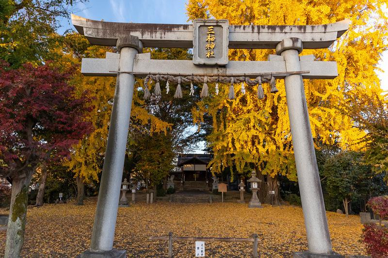 2020紅葉きらめく京都 黄色い絨毯(三栖神社)_f0155048_00075718.jpg