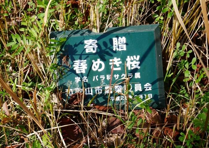 春めき桜  2021-03-19 00:00  _b0093754_23300594.jpg