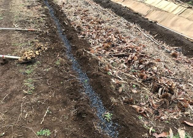 キクイモ植え付け、ネギなど種まき(3・9~12)_c0014967_12050486.jpg