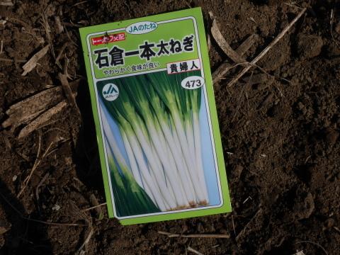 キクイモ植え付け、ネギなど種まき(3・9~12)_c0014967_12091539.jpg