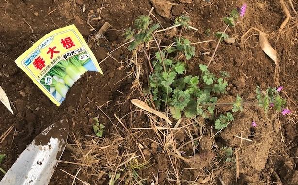 キクイモ植え付け、ネギなど種まき(3・9~12)_c0014967_12114979.jpg