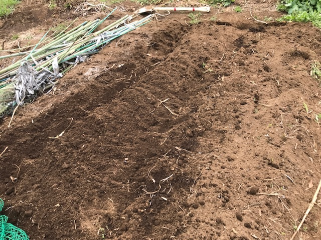 キクイモ植え付け、ネギなど種まき(3・9~12)_c0014967_12124026.jpg