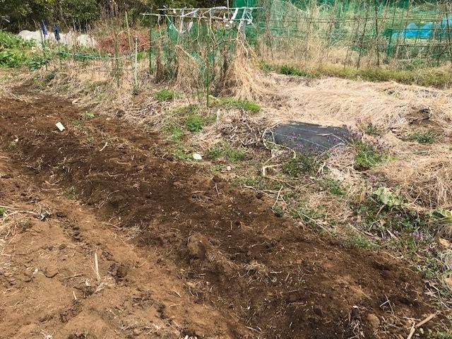 キクイモ植え付け、ネギなど種まき(3・9~12)_c0014967_12134815.jpg