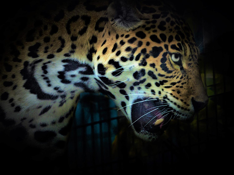 天王寺動物園_e0254493_15403918.jpg
