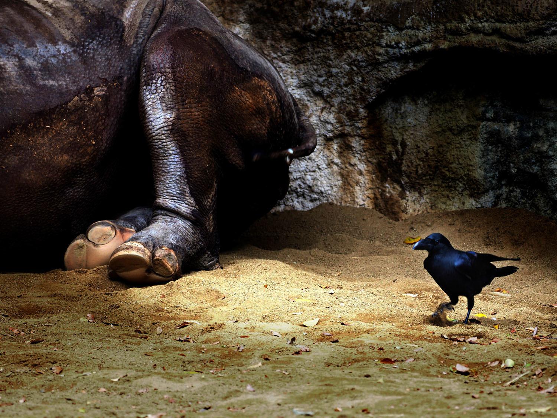 天王寺動物園_e0254493_15404598.jpg