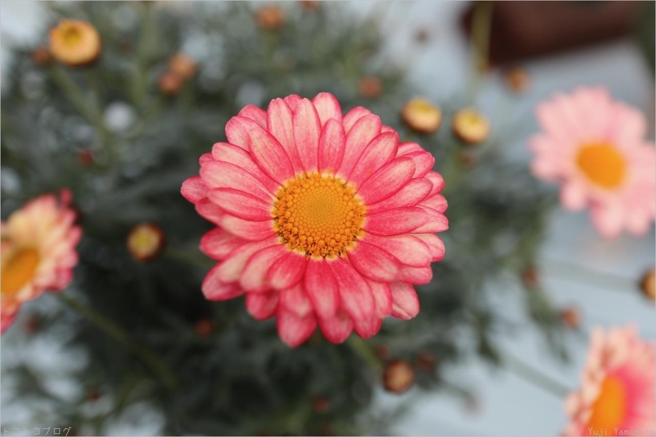 ピンク色_c0202706_18450349.jpg