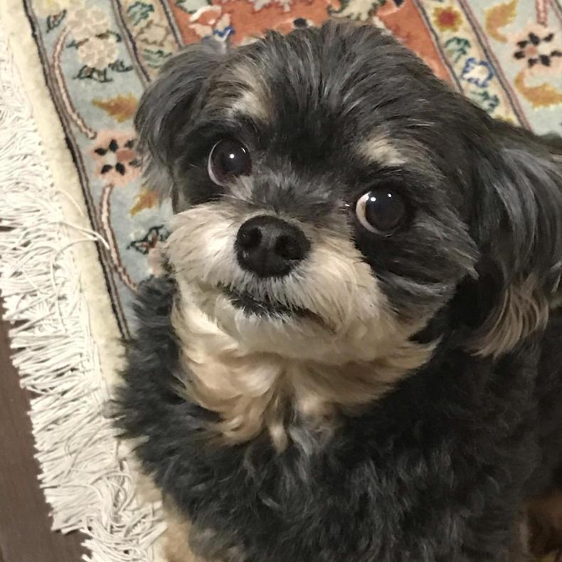 愛犬のつぶらな瞳_b0004907_21384163.jpg