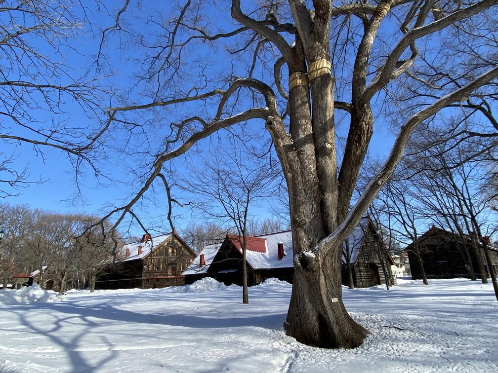"""2021年1月 『新雪の北大キャンパス』 January 2021 \""""Hokkaido University in the White Snow\""""_c0219616_10443799.jpg"""