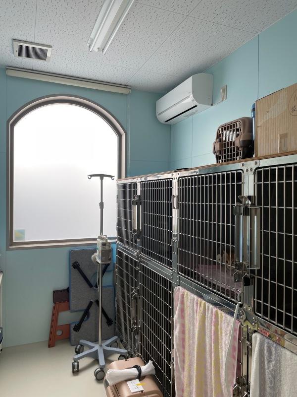 猫舎移動(飯塚動物病院)_d0086022_02100759.jpg
