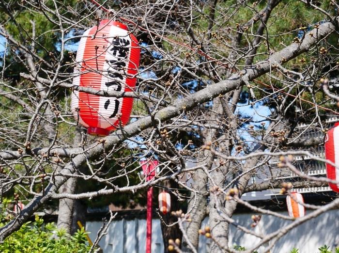 桜まつり準備完了  2021-03-15 00:00_b0093754_23183009.jpg